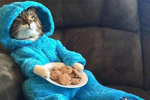 Foto de gato fantasiado enviada por engano pelo Departamento de Estado americano
