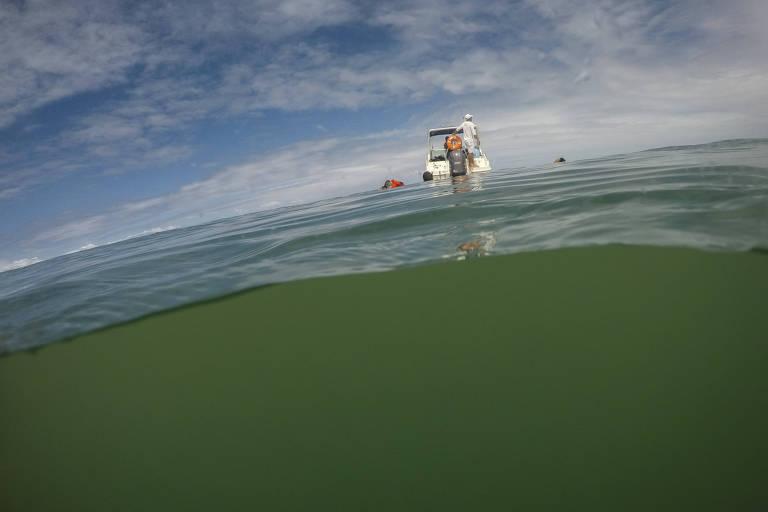Metade da foto está dentro d'água e a outra metade, fora. Sobre o mar, tem uma lancha parada