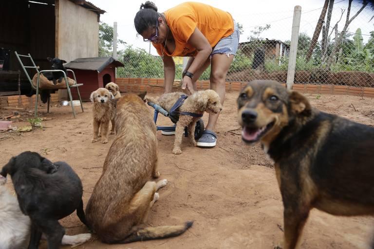 Abrigo para animais deficientes no Paraguai
