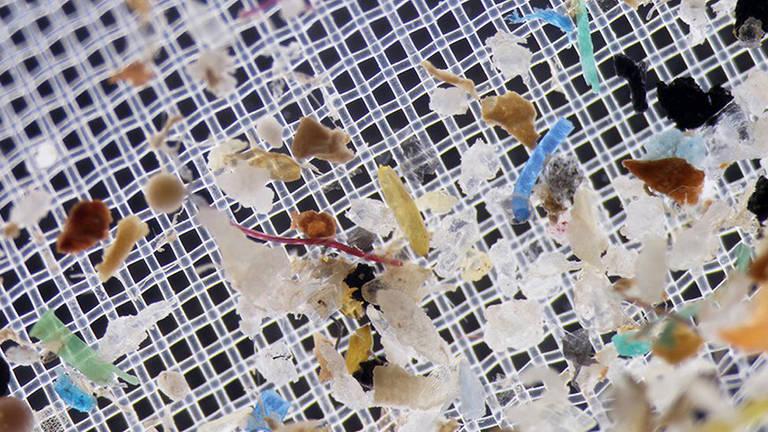 Estudo mostra que podemos estar 'contaminados' por microplásticos, assim como os oceanos