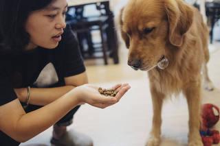 Olivia Ren tasted pet food before her dog Dada eats it, in Shanghai.
