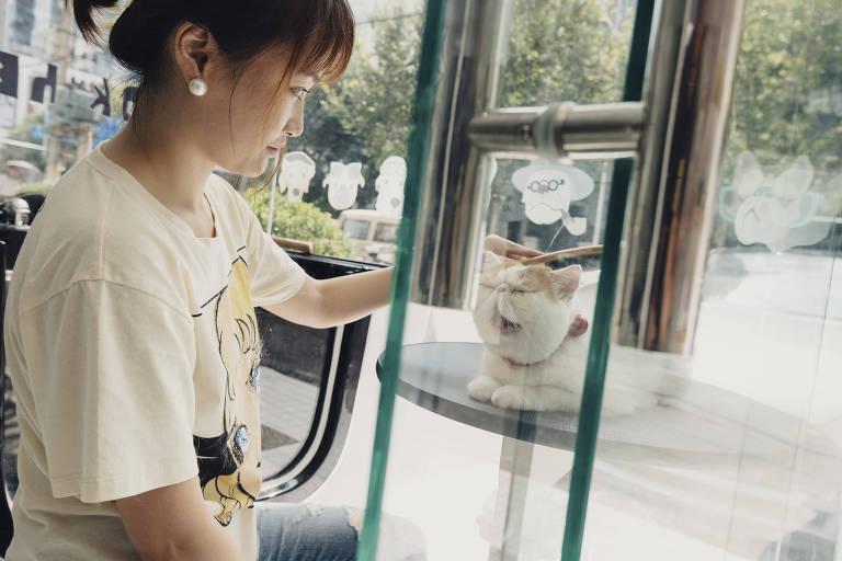 Wang Dan com seu gato, Jiaduobao, em loja para pets em Xangai