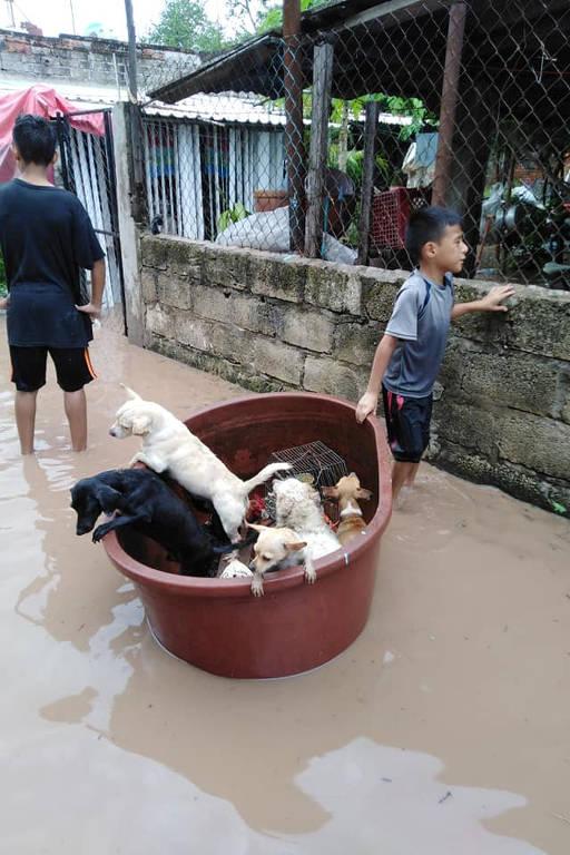 Jostyn, 9, resgata cães e uma galinha em área inundada por ação do furacão Willa em Ruiz, Nayarit, México