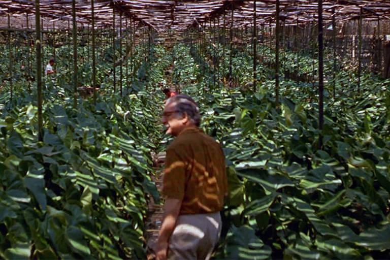 Filme Paisagem – Um Olhar Sobre Roberto Burle Marx