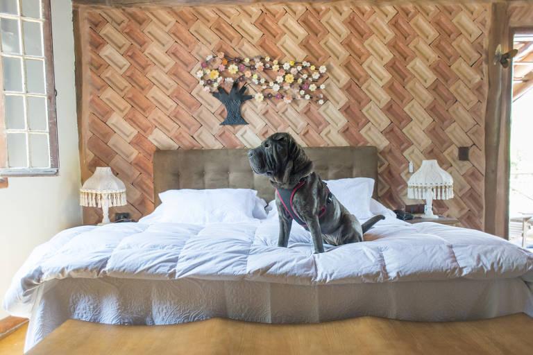 Cachorro em cima da cama de pusada