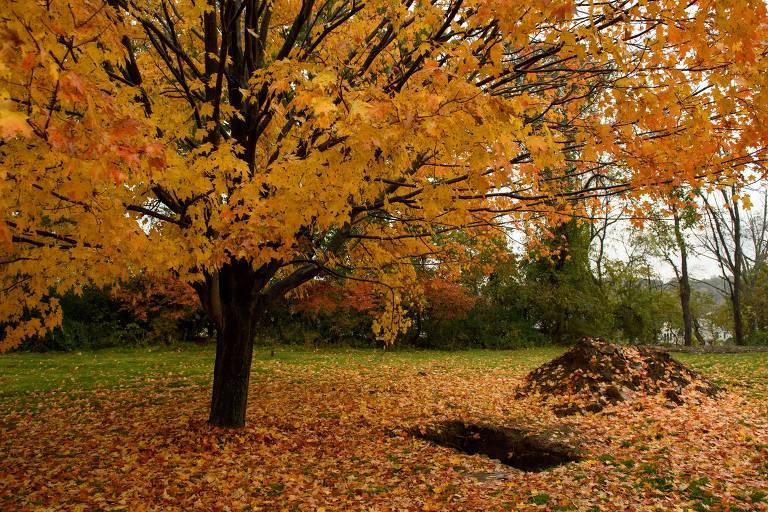Livro conta como foram achados os 'galhos' da famosa árvore da vida