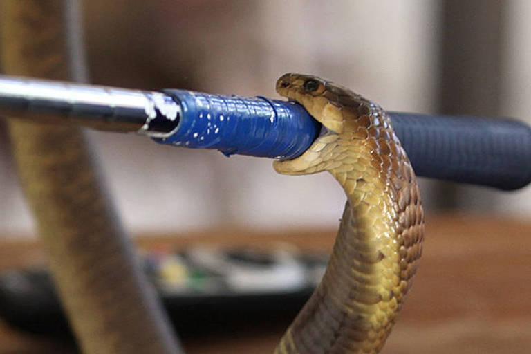 O especialista em cobras que documentou a própria morte após ser picado