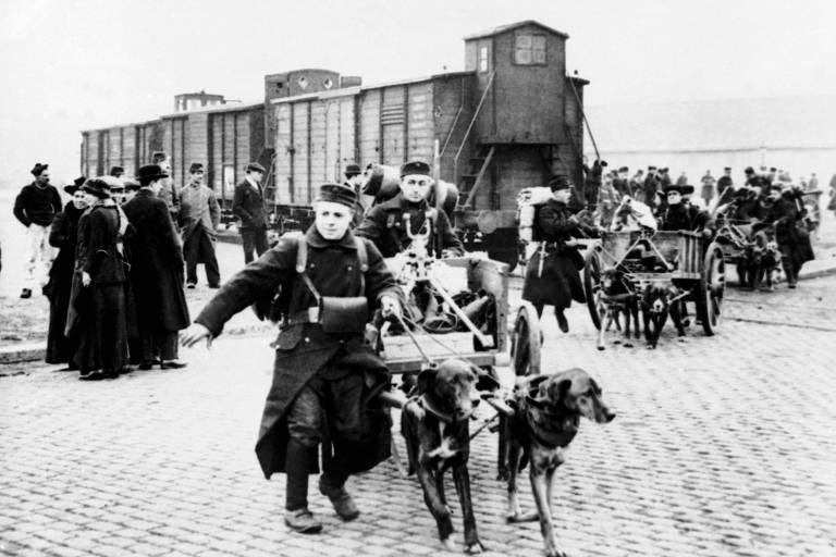 Conheça o papel dos animais na Primeira Guerra Mundial