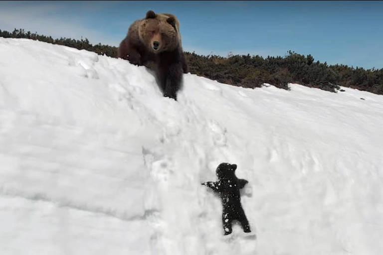 Filhote tenta acompanhar a mãe, mas acaba deslizando vários metros para baixo