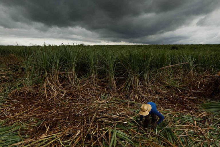 Mais açucareira, safra de cana cresce em 2020 no centro-sul do país, indica estudo