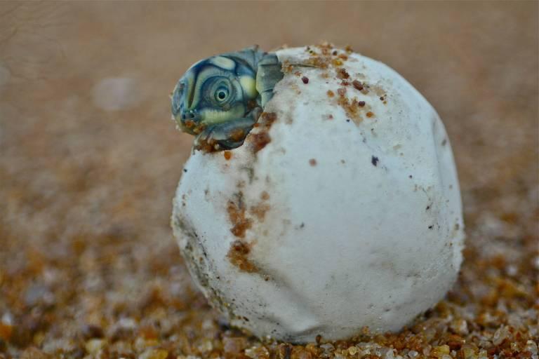 Protetores de tartarugas