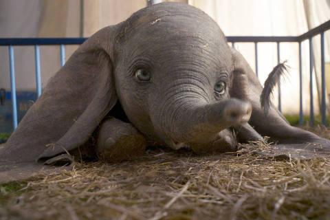 Babyelefant Dumbo wird wegen seiner großen Ohren verspottet DIREITOS RESERVADOS. NÃO PUBLICAR SEM AUTORIZAÇÃO DO DETENTOR DOS DIREITOS AUTORAIS E DE IMAGEM
