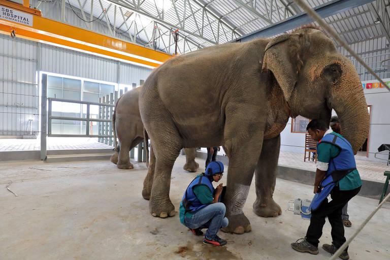 Hospital de elefantes na Índia