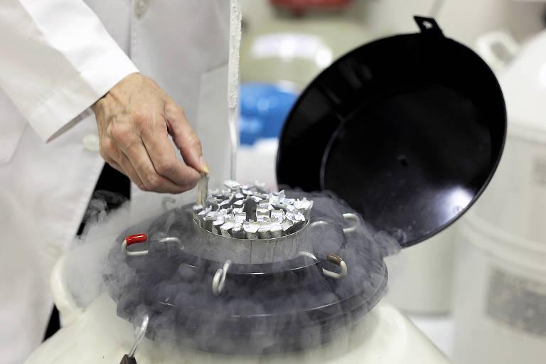 Botijões de armazenamento com nitrogênio líquido a -196°C, com amostras de sêmen
