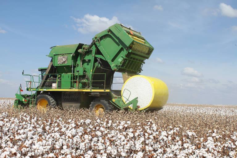 Colheita de algodão em fazenda em Goiás; embarques sobem 55%