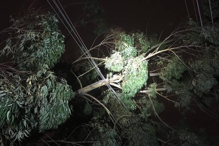 Árvore caída na zona sul de São Paulo