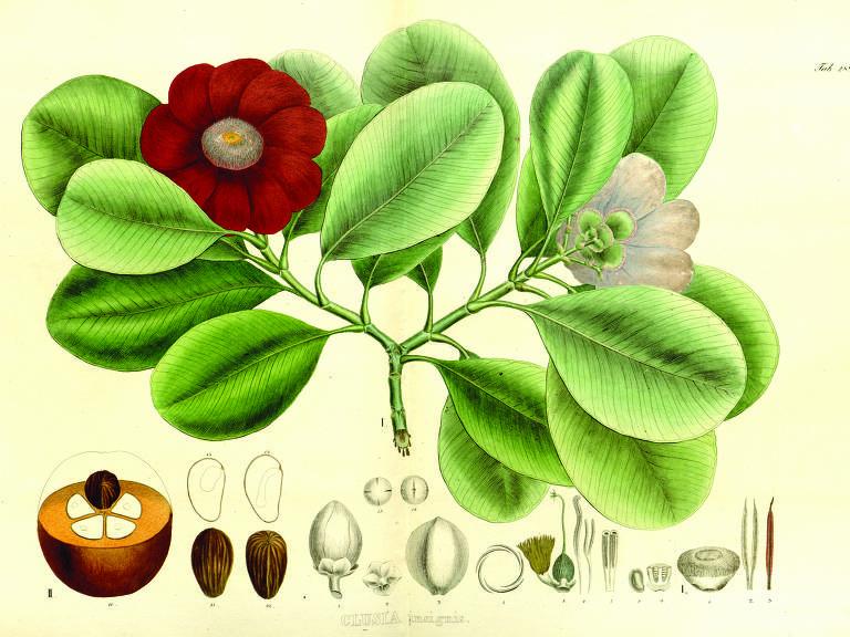 flores, fruto e sementes