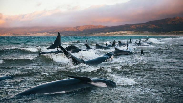 Liz e seu amigo Julian tentaram empurrar algumas baleias de volta para águas mais profundas, mas elas eram muito pesadas e não saiam do lugar