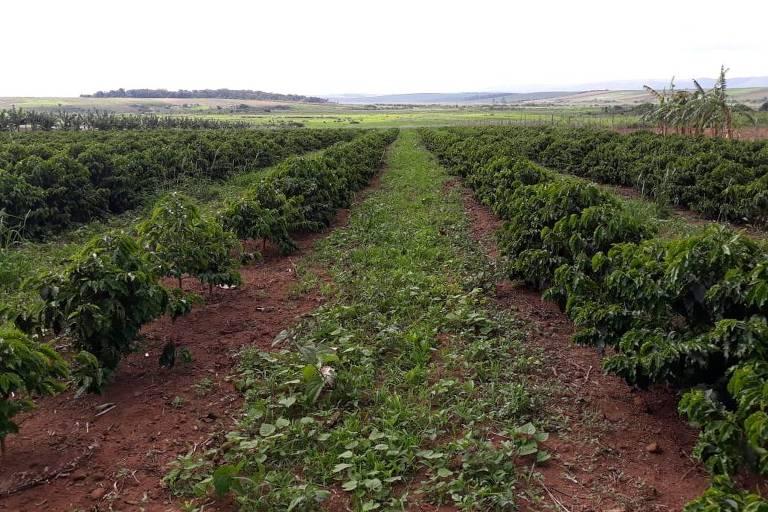 Área da antiga usina Ariadnópolis, em Campo do Meio, alvo de imbróglio entre a família proprietária da terra e grupo ligado ao MST