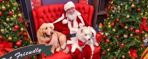 Cães com Papai Noel