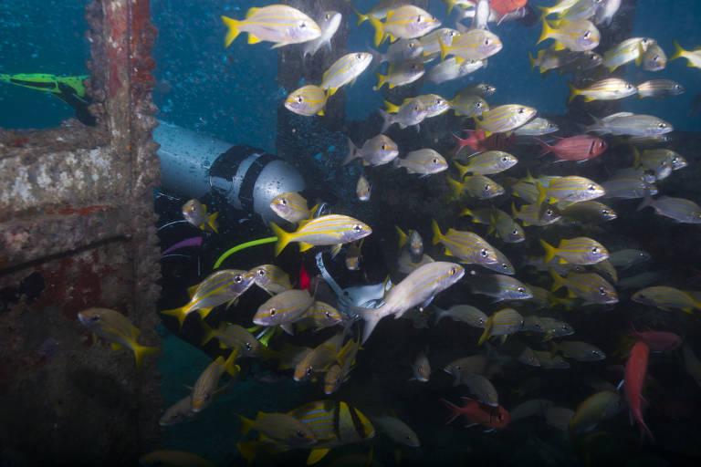 Cinco lugares para mergulhar no Brasil