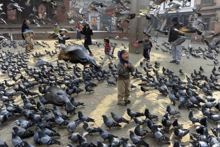 Criança em meio a inúmeros pombos