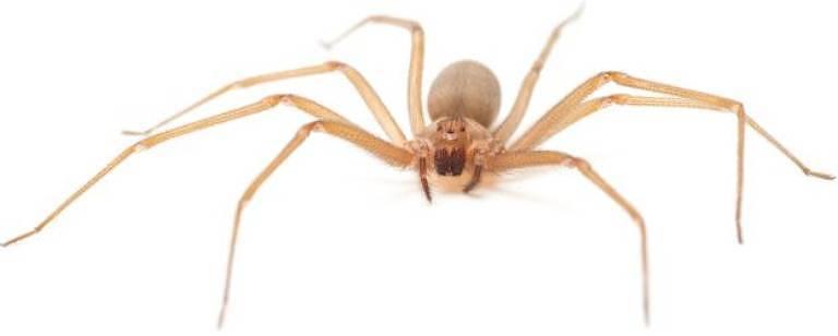 Aranha em um fundo branco