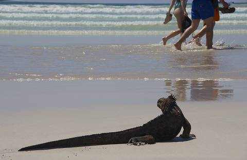 Iguana na Playa Brava, em Tortuga Bay