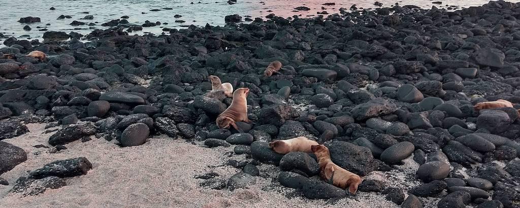 Lobos-marinhos em praia