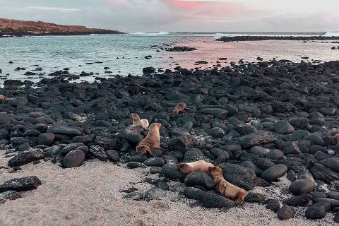 La Loberia, na ilha de San Cristobal, onde se concentram lobos marinhos