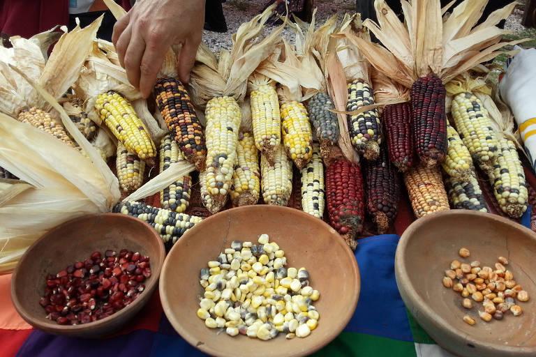 Variedade de milho em feira em La Paloma, Uruguai