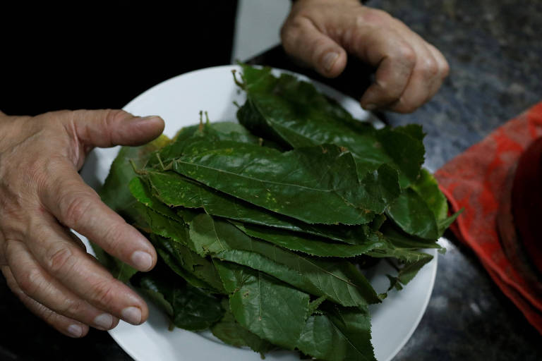 Folhas de árvore por falta de remédio na Venezuela
