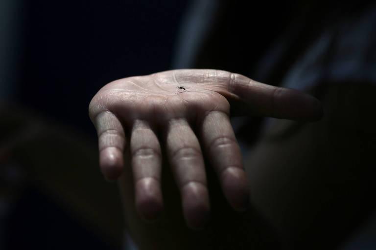 Chikungunya deve chegar com mais força à região Sudeste
