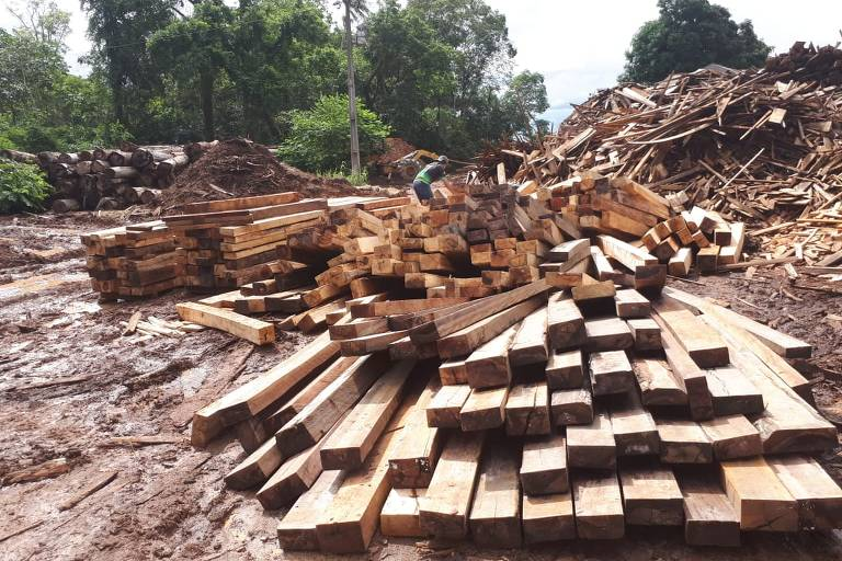 Lumber yard closed by Ibama agents in Manacapuru (AM)