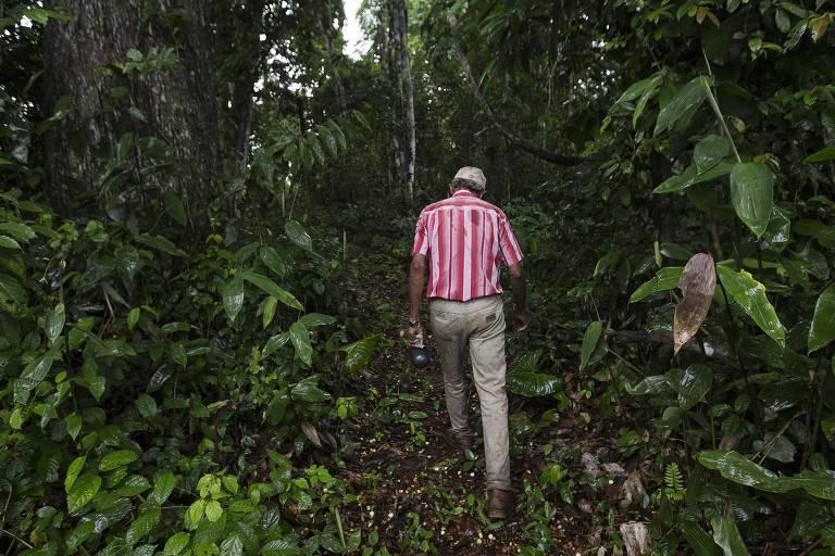 Herdeiros de Chico Mendes apostam em floresta plantada para o futuro no Acre