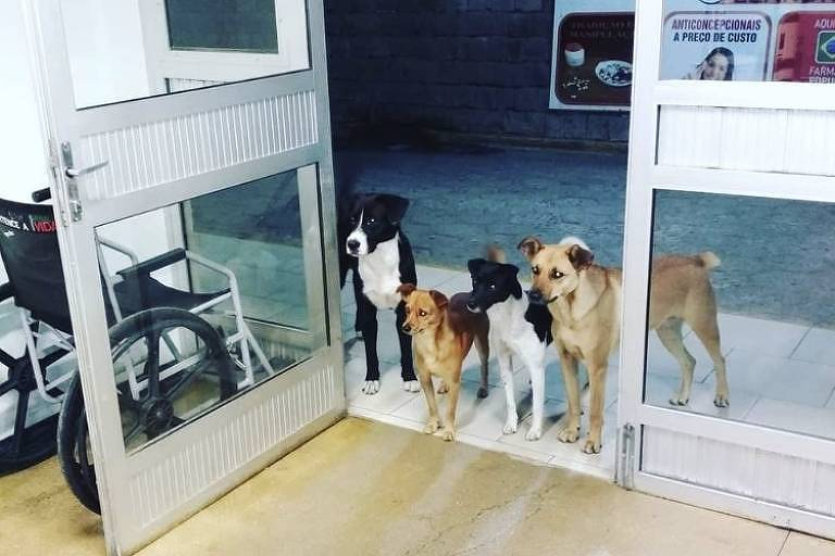 Retrospectiva 2018 - Bom Pra Cachorro