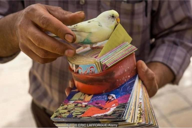 Pássaro amarelo segura carta
