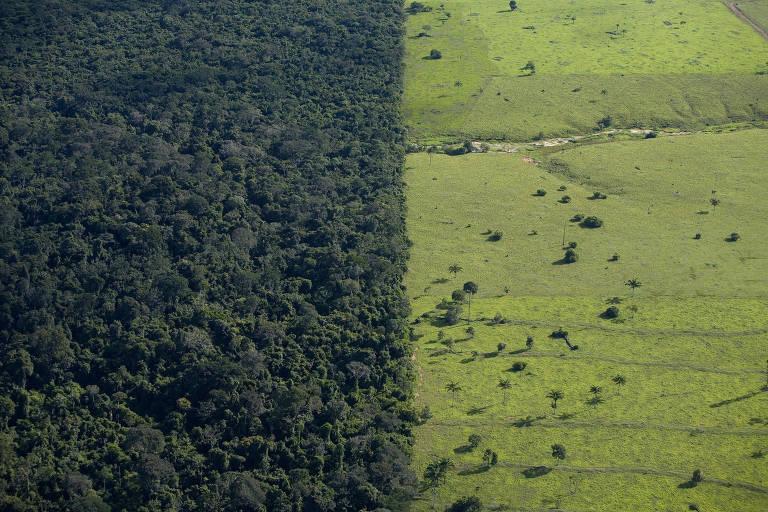 Área de floresta próxima a pasto em Mato Grosso