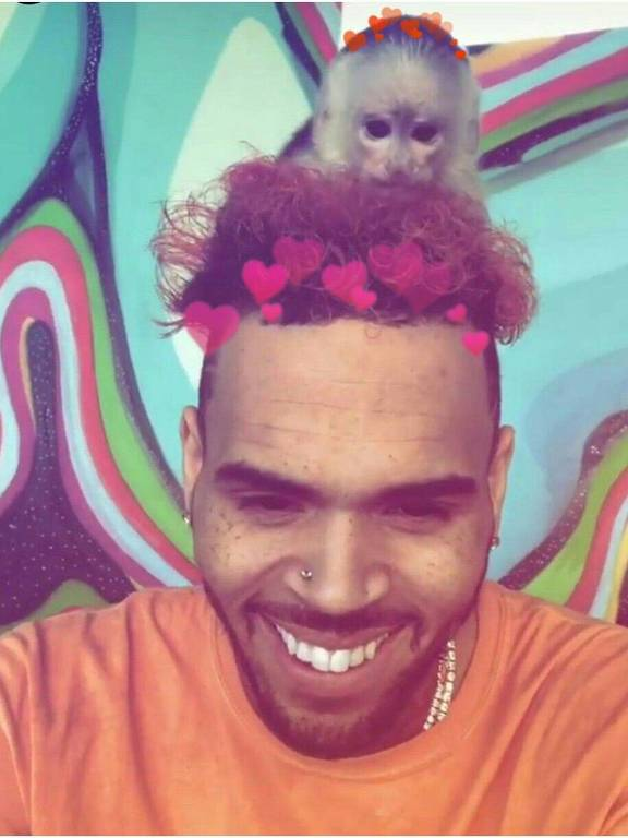 chris brown com um macaco na cabeça