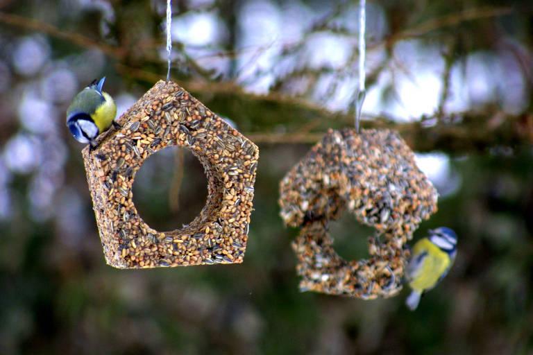 cabana de pássaros do atelier-öi de design suíço