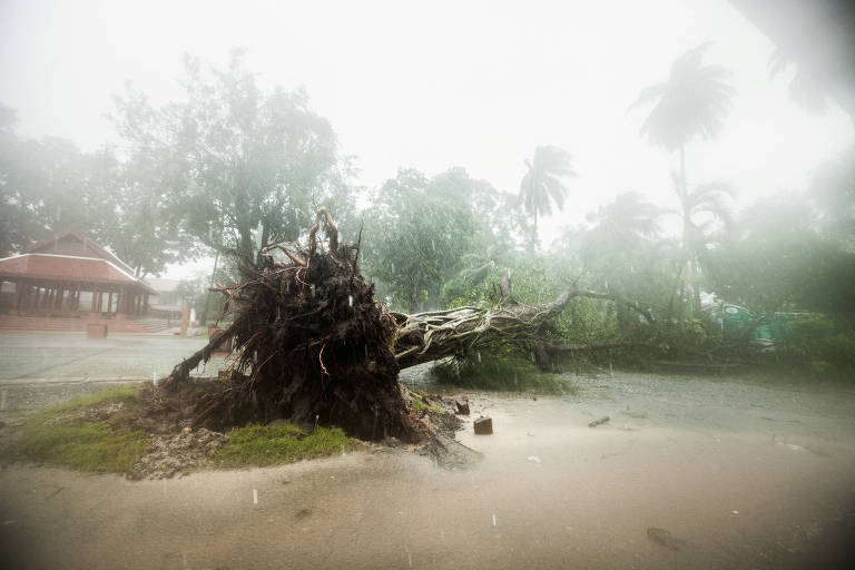 A fallen tree is seen as tropical storm Pabuk approaches the southern province of Nakhon Si Thammarat