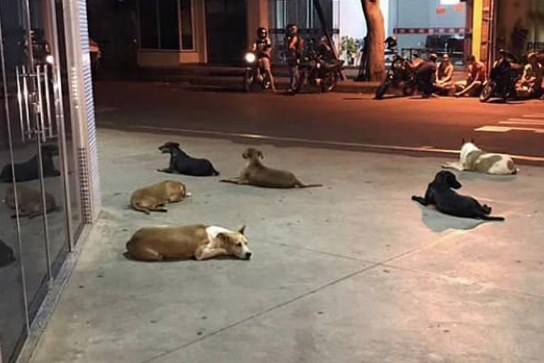 Seis cachorros deitados em frente a uma porta de hospital