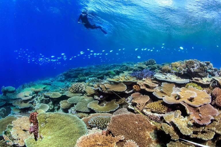 Australianos tentam regenerar a Grande Barreira de Corais, afetada pela alta na temperatura dos oceanos