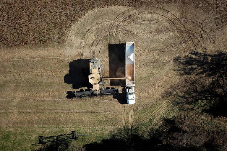 Colheita de soja na Carolina do Norte (EUA)