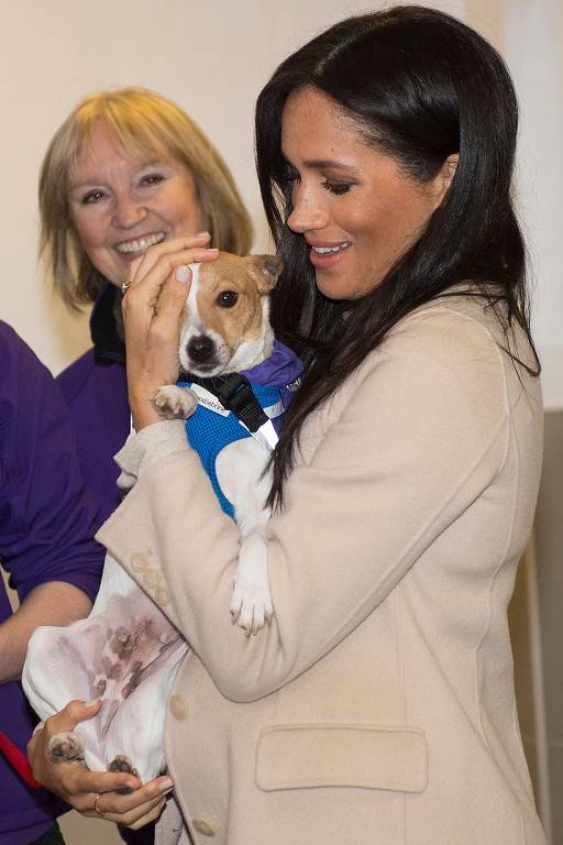 Meghan acaricia jack russell Minnie durante visita a ONG em Londres