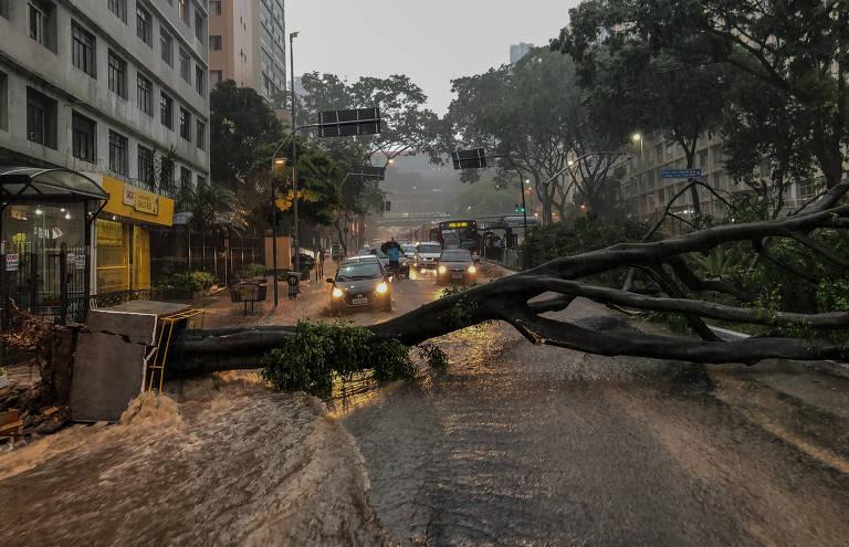 Chuva forte e queda de árvore em SP