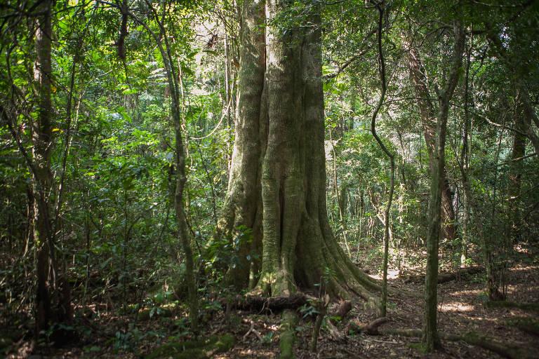 Doria privatiza gestões do parque da Cantareira e do Horto Florestal por R$ 850 mil