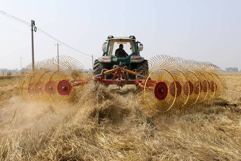 (181221) -- BEIJING, Dec. 21, 2018 (Xinhua) -- A farmer packs wheat straw in the fields in Beigaoli Village in Xingtang County, north China's Hebei Province, June 14, 2018. China has seen an outstanding shift in way of farming with the mechanization rate in the agriculture sector exceeding 66 percent in 2017, an official with the Ministry of Agriculture and Rural Affairs said Wednesday. China currently has more than 2,500 agricultural machinery enterprises, and the country's agricultural production is now mainly completed with farming machines, replacing previous manual labor, Zhang Taolin, vice minister of Agriculture and Rural Affairs, told a press conference. (Xinhua/Liang Zidong)
