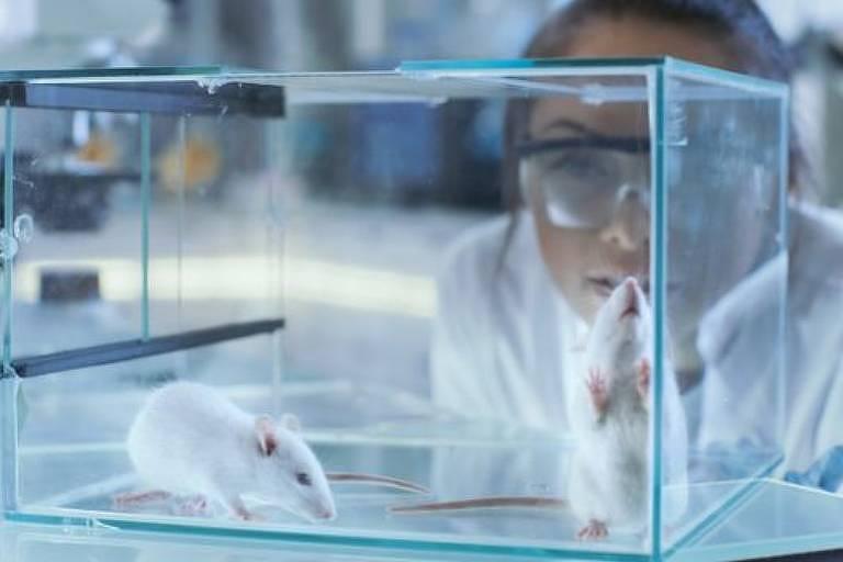 Só há relatos científicos sobre os efeitos de injetar sêmen em ratos e coelhos