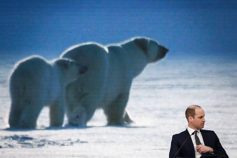 Telão atrás do príncipe William exibe imagem de urso polar enquanto ele entrevista naturalista em Davos